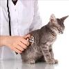 Ветеринарные клиники в Панино